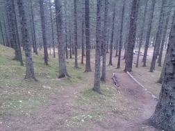 Almost as soon as I entered the woods I found a trail someone had built which I followed up the hill