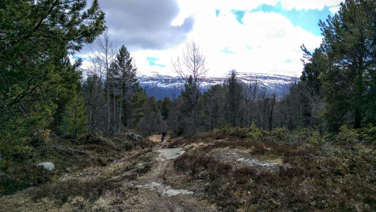 enduro mountain biking on singletrack in oppdal norway raudhovden