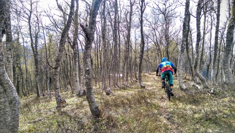 enduro riding forest in fjora in hawaiin shirt